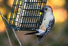 All Other Birds : Woodpeckers, Humming Birds, Turkeys, and others