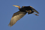 Fishing Birds : Herons, Egrets, Kingfishers, and others