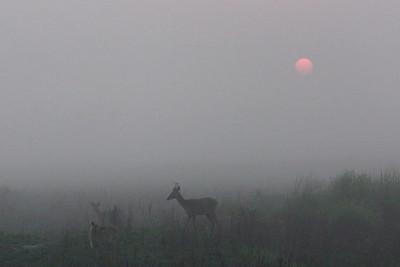 Sunrise in Kaziranga