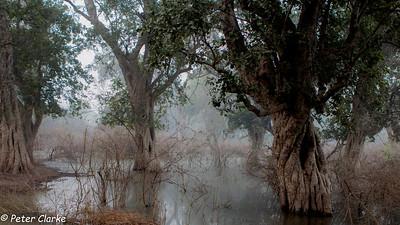 Bharatpur Dawn