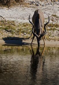 Kudu at the lake