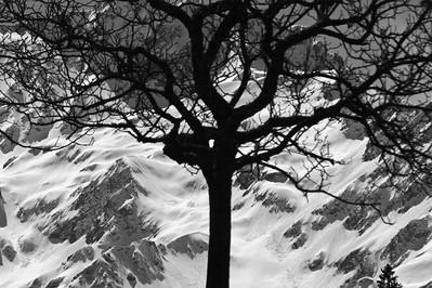 Baren tree silhouette