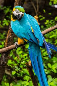 Macaw closeup