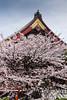 Sensoji Temple,