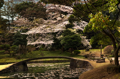 Koishikawa Kōrakuen Garden, #1