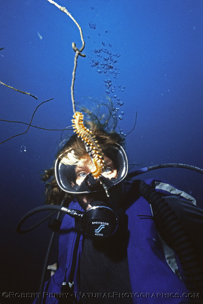polychaete and diver Log 1149 1985-08 Bonaire