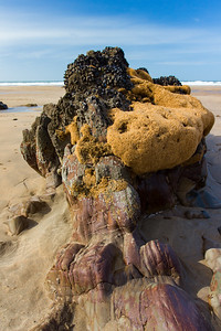 Sandcastle worm reef