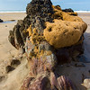Sandcastle worm reef