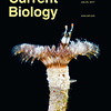 My photo of Acromegalomma interruptum on a recent cover of Current Biology