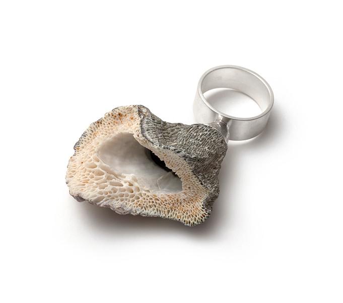 Grey Coral