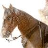 Palomino and Rider