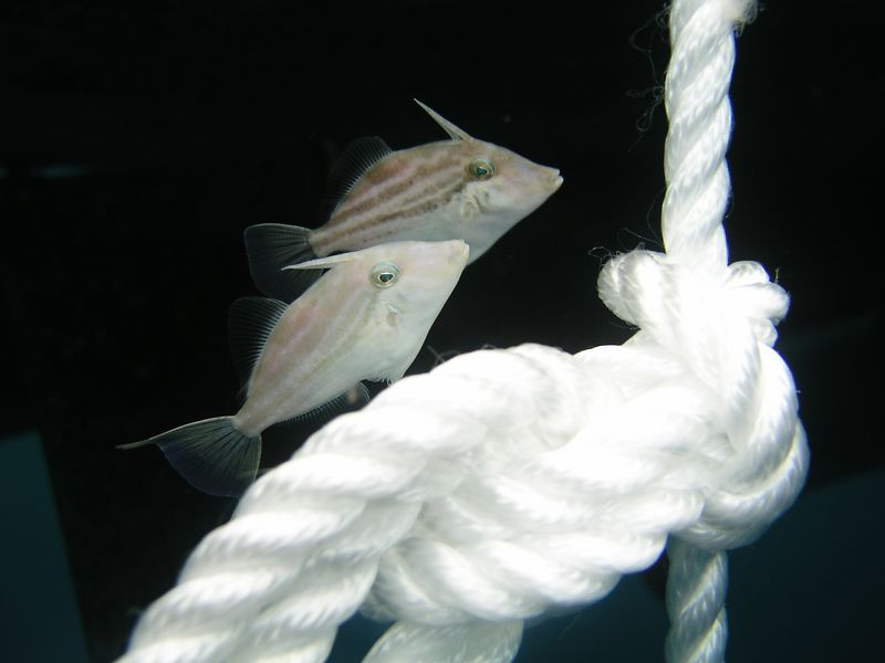 Two ugly fish and a piece of rope - what do you want from me??