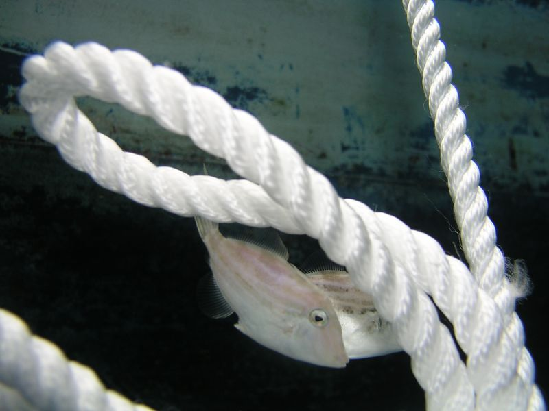An ugly fish and a piece of rope - what do you want from me??