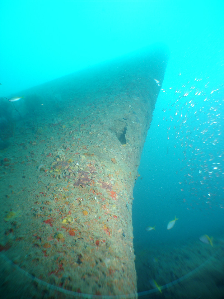 Looking up the inverted bow of the Campinila from the sea bed