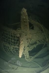 HMS Puriri