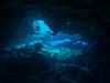 Shark's Cove dens