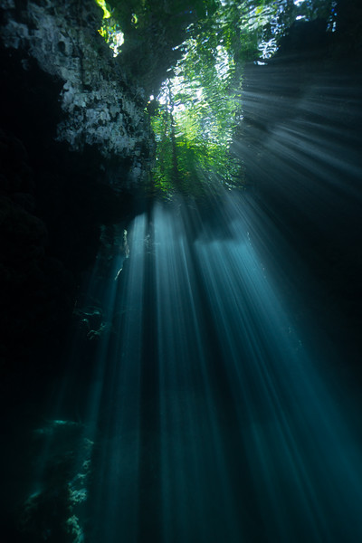 Light in the forest cavern