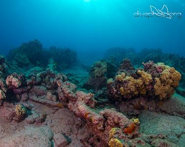 Twin Anchor Chains on Seafloor in Mahukona, Hawaii