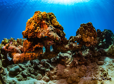 Anchor chain with coral growth