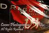 Dragon Gate USA - Freedom Gate 2010