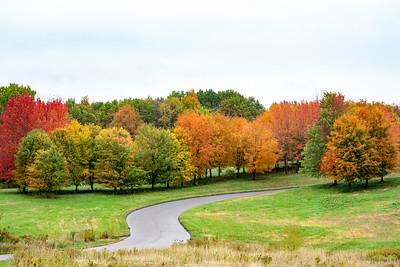 Arboretum color fall