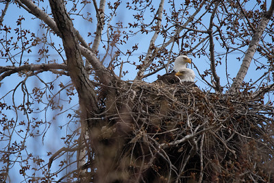 Eagle 13 nest