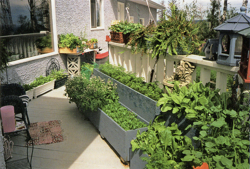 Herbs and vegetables on the deck, handy to the kitchen