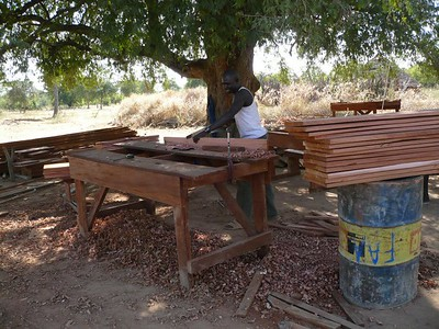 This tree used to be a classroom. Now it helps with the furniture-making.