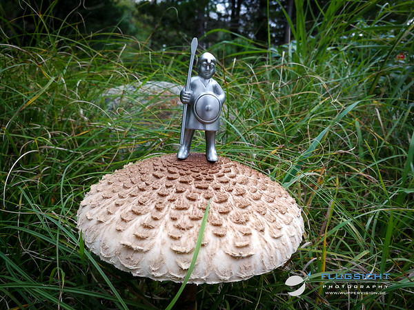 September 2019:The conquest of deadly danish mushrooms - Part I