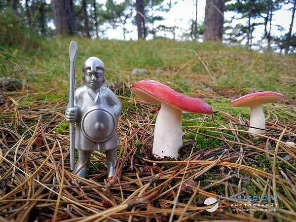 September 2019: The conquest of deadly danish mushrooms - Part III