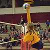 Wyandotte's Aubrey Kell (7) gets up high to send the ball to the Melvindale side of the court. The Bears traveled to Melvindale, and defeated the host Cardinals on Tuesday night. Wyandotte won 25-8, 25-22, and 25-11. (MI Prep Zone photo gallery by RYAN DICKEY)
