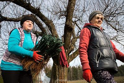 Nasadzenia winorośli  Winnica Dwórzno ©Agata Katafiasz-Matysiak