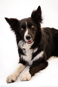 Wyn (Border Collie)-22