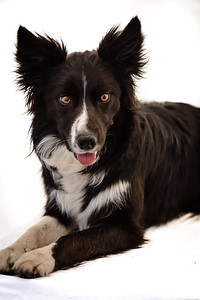 Wyn (Border Collie)-24