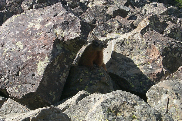 Marmot in the Rocks
