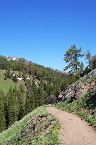 Mt. Washburn Trail - 6/25/2002
