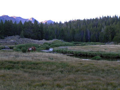 """Another """"horse"""" shot.  I'm camped in the trees right behind the horse on the other side of the stream."""