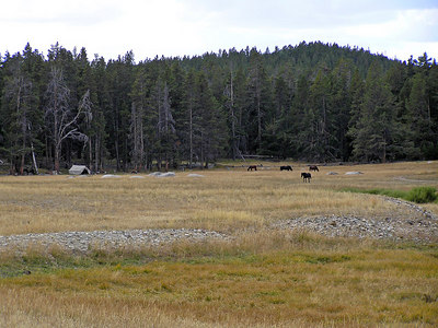 """This big set of meadows/park/whatever is all National Forest.  And, it was hunting season.  So, every so often I'd see a hunting camp set up.  Here's an old timey one (horses; probably hobbled).  Others I saw had trailers and ATVs.  Now, I need to point out a difference here.  Note how I said """"every so often"""".  Well, what that meant was I'd see a hunting camp once ever mile or two (or more).  If I'd been in Colorado, """"every so often"""" would mean see a hunting camp once every 50 yards or so.  There's a difference."""