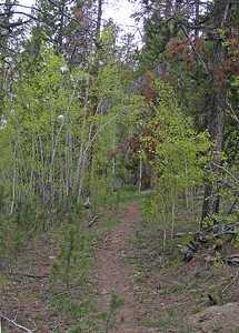 The trail was mostly a gentle climb.  Crossing a lot of meadows, through aspens, and by some small lakes.