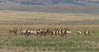 Pronghorn bachelor party - south of Casper, WY