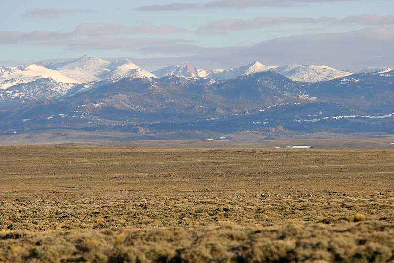 Sage grouse lek on Oregon Trail - South Pass (Wind River Mountains in background)