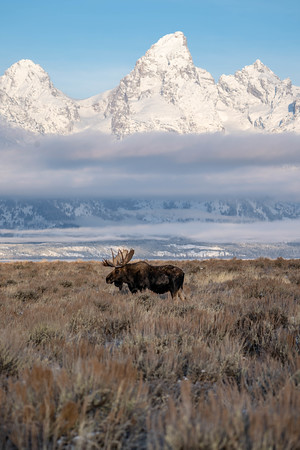 King of the Tetons