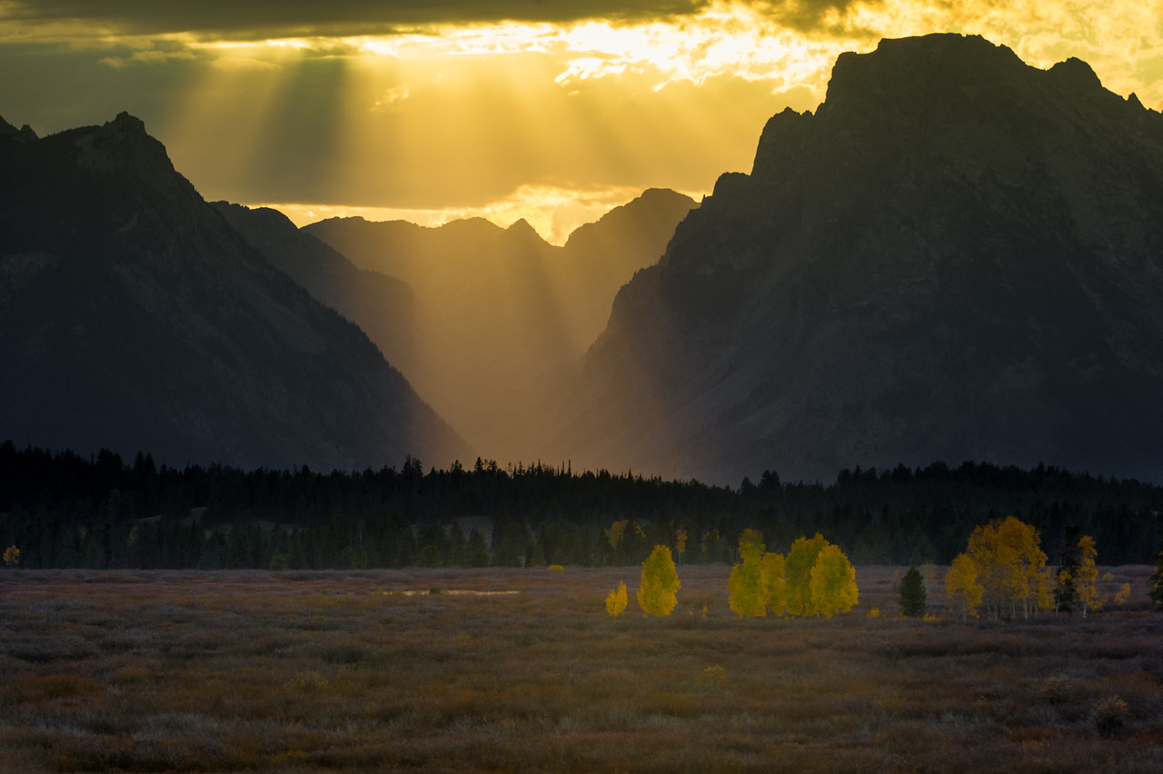Aspen trees glowing in the early evening sunlight