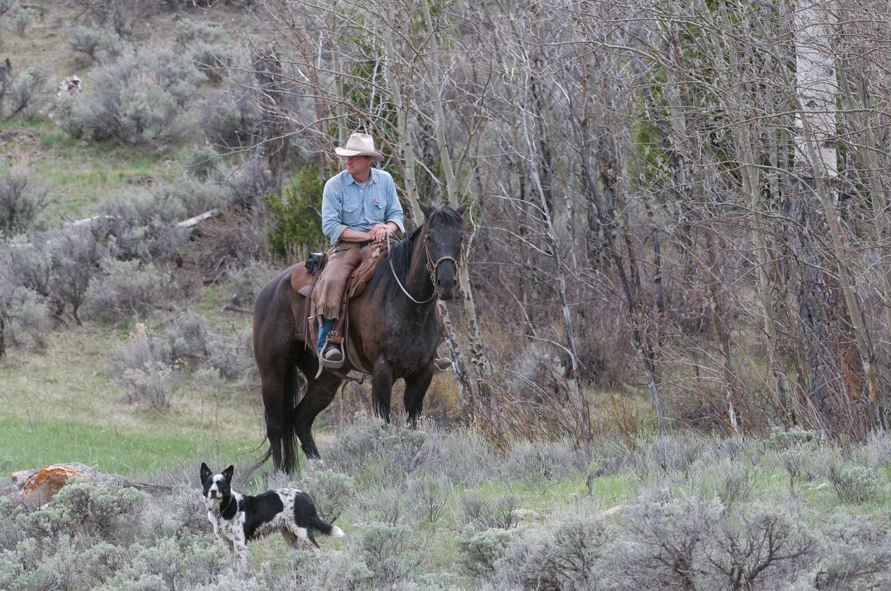 Wyoming Rancher