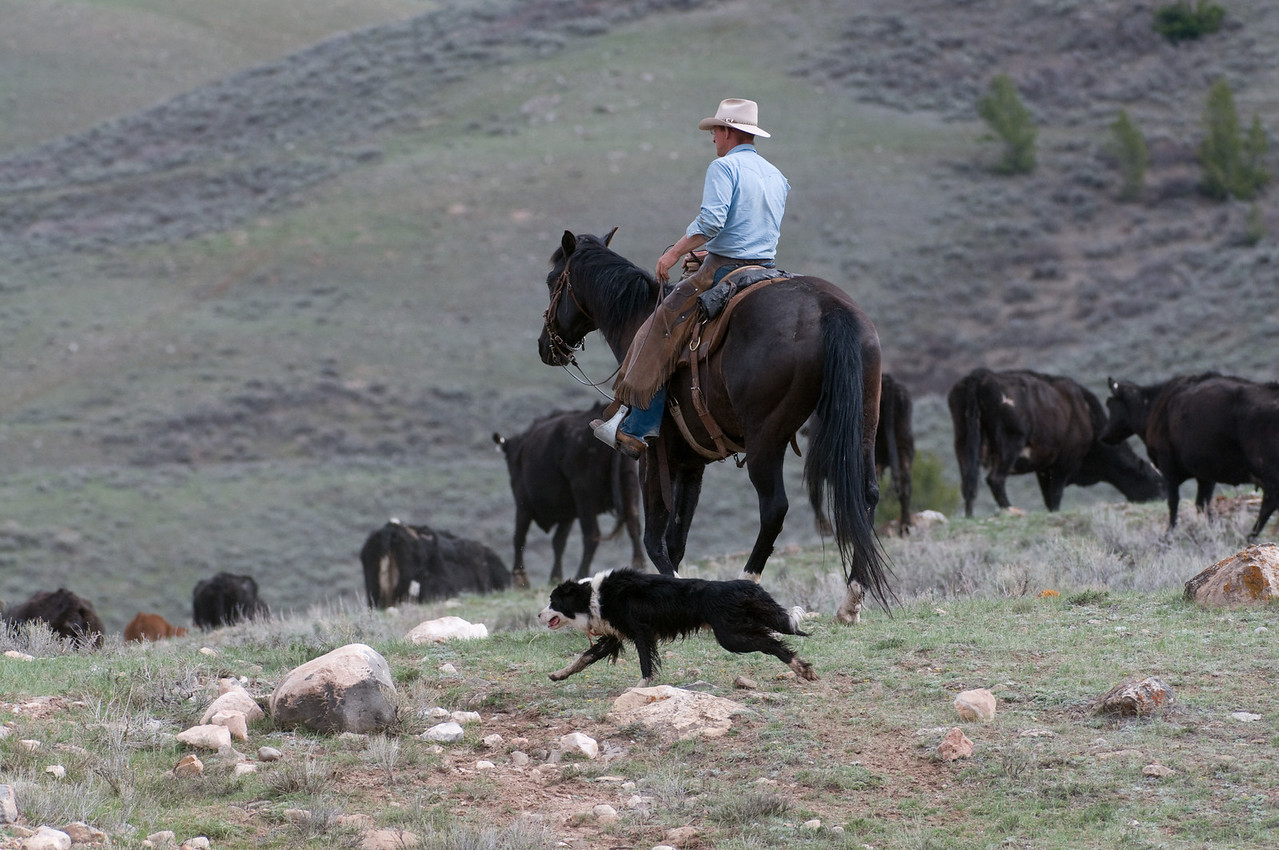 Taking Care of Ranch Business