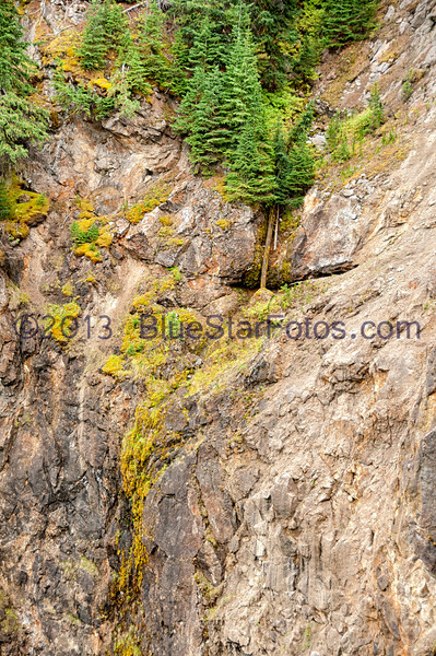 The canyon wall that faces the Upper Falls and the life that grows from the mist.