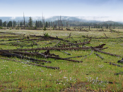 Remenants of the Yellowstone fire of 1988.