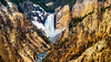 The Lower Yellowstone Falls in the Grand Canyon of the Yellowstone in Yellowstone National Park, Wyoming, USA.
