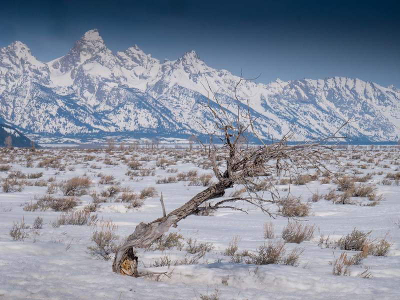 Lone Tree and Tetons
