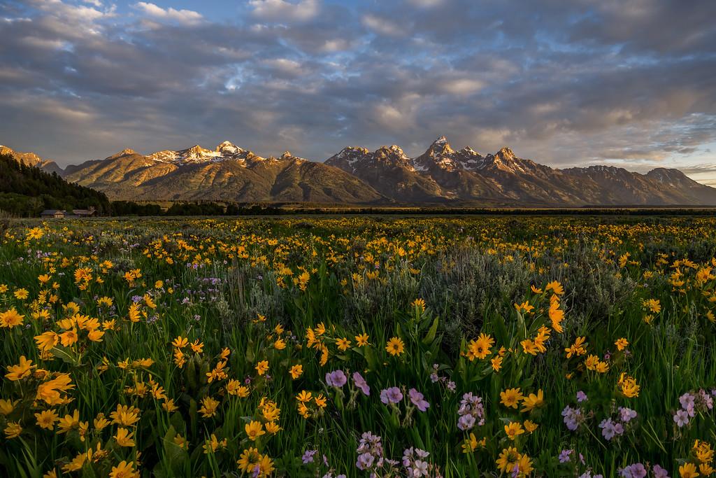 Antelope Flats Road Flowers